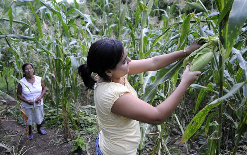 La agroecolog a como alternativa al monocultivo agencia tss for Sembrar maiz y frijol juntos