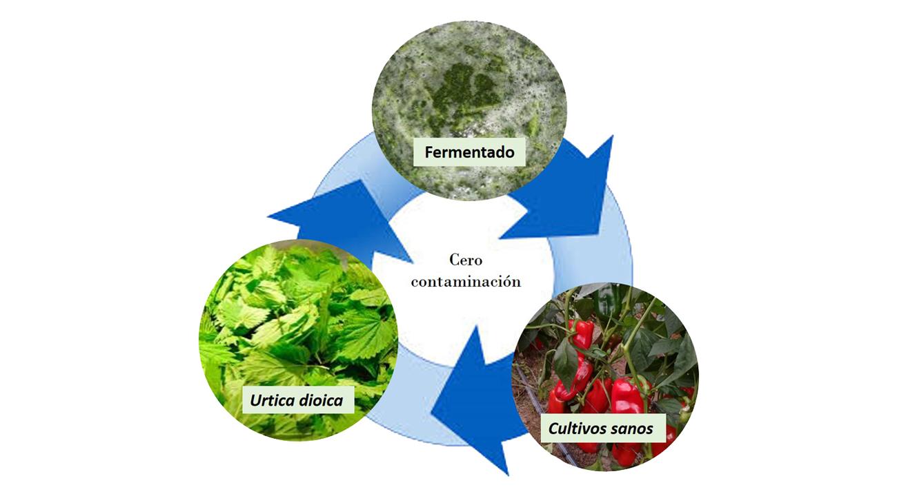 """""""El proceso para transformar la ortiga en biofertilizante es económico porque es un proceso sencillo de fermentación que utiliza preferentemente agua de lluvia"""", dice la bióloga Andrea Oviedo."""