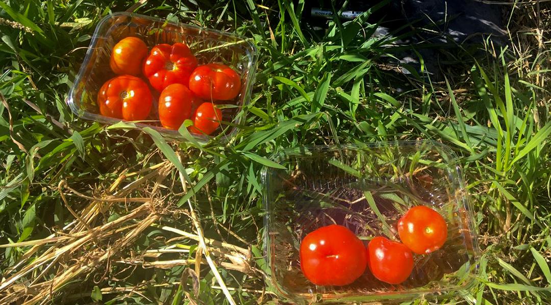tomate-slider2